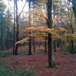 Fall Hikes @cearaskitchen #activity #happy