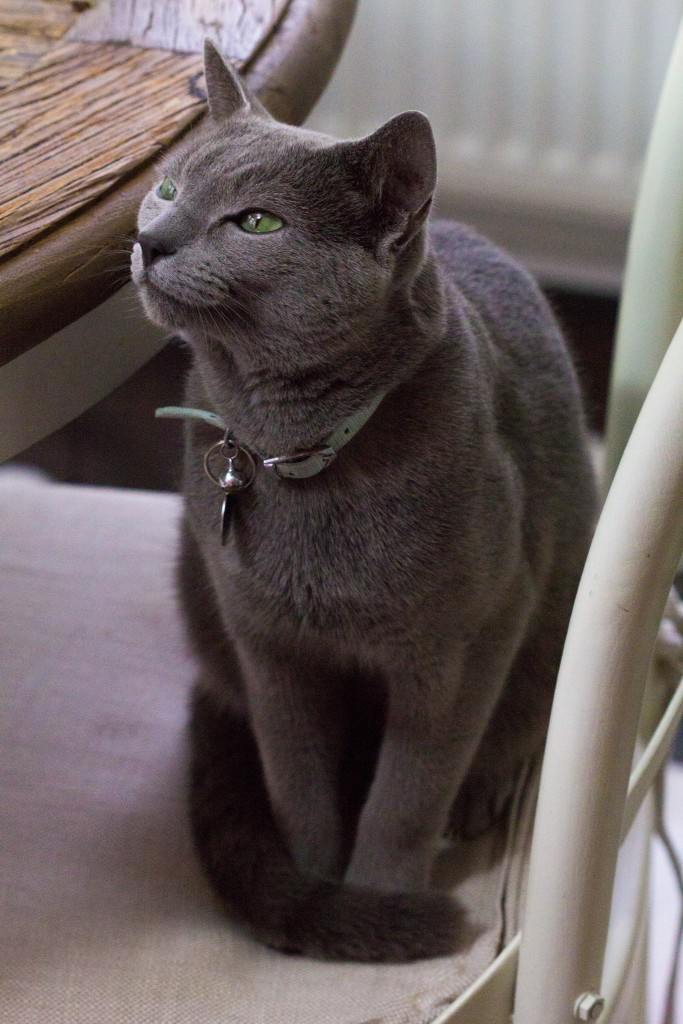 black cat with bells